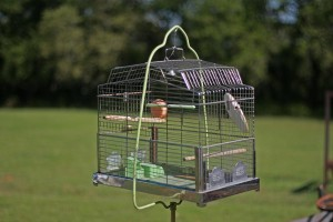 birdcage closeup